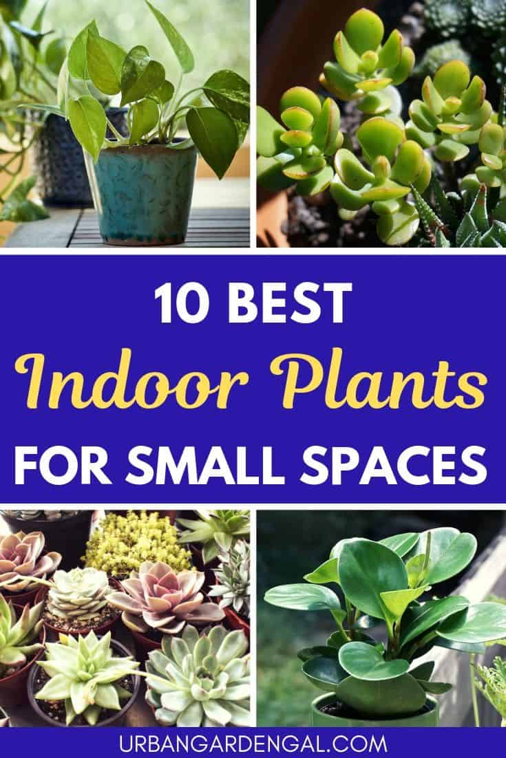 Indoor plants for small spaces
