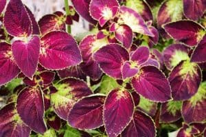 10 Colorful Houseplants