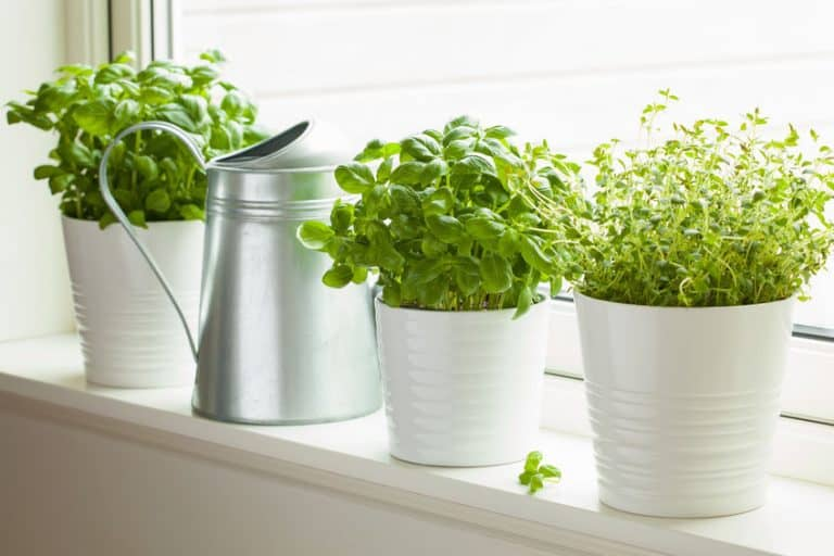9 Herbs to Grow Indoors