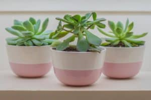 10 Small Indoor Plants for Compact Spaces