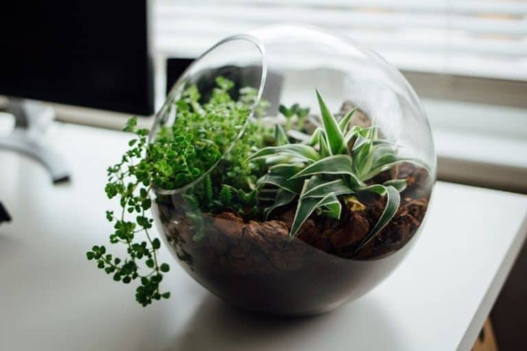 10 Best Terrarium Plants