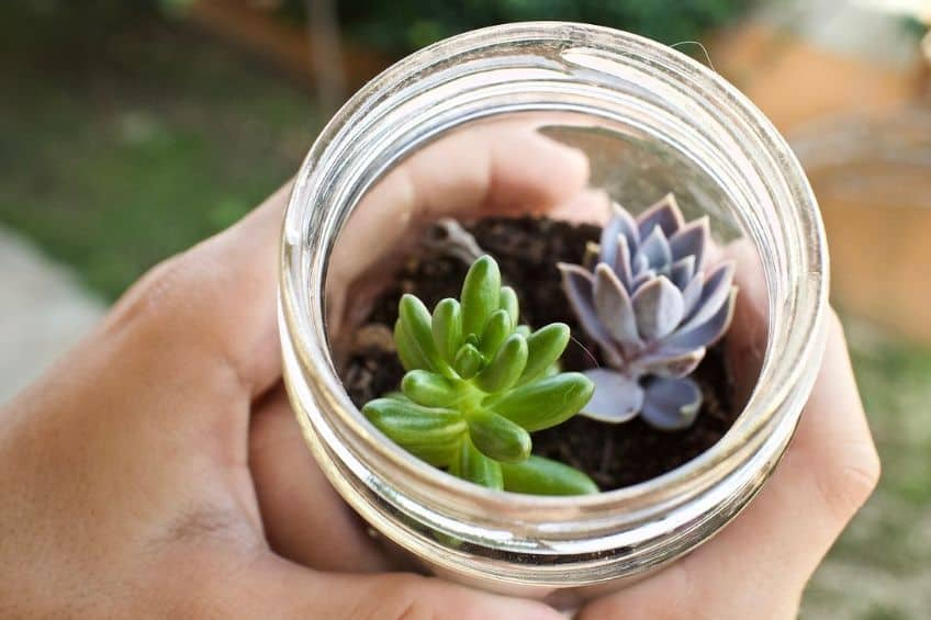 Glass jar plant pot