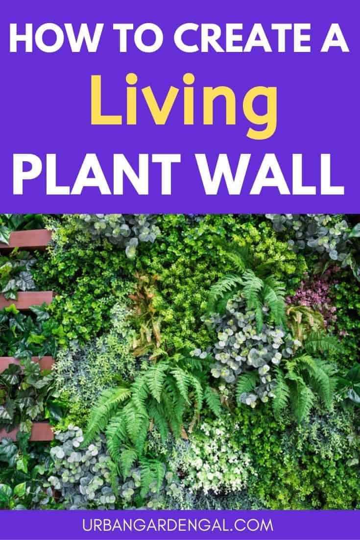 How to create a living plant wall