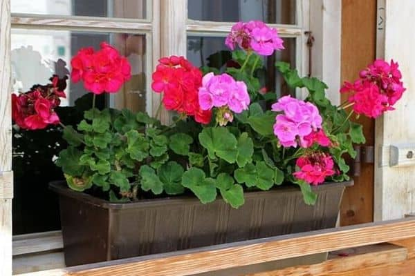Flowers in window box