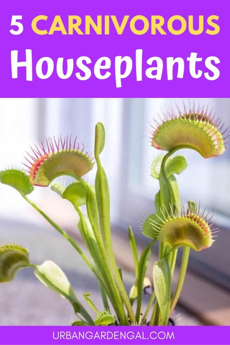 Best carnivorous houseplants