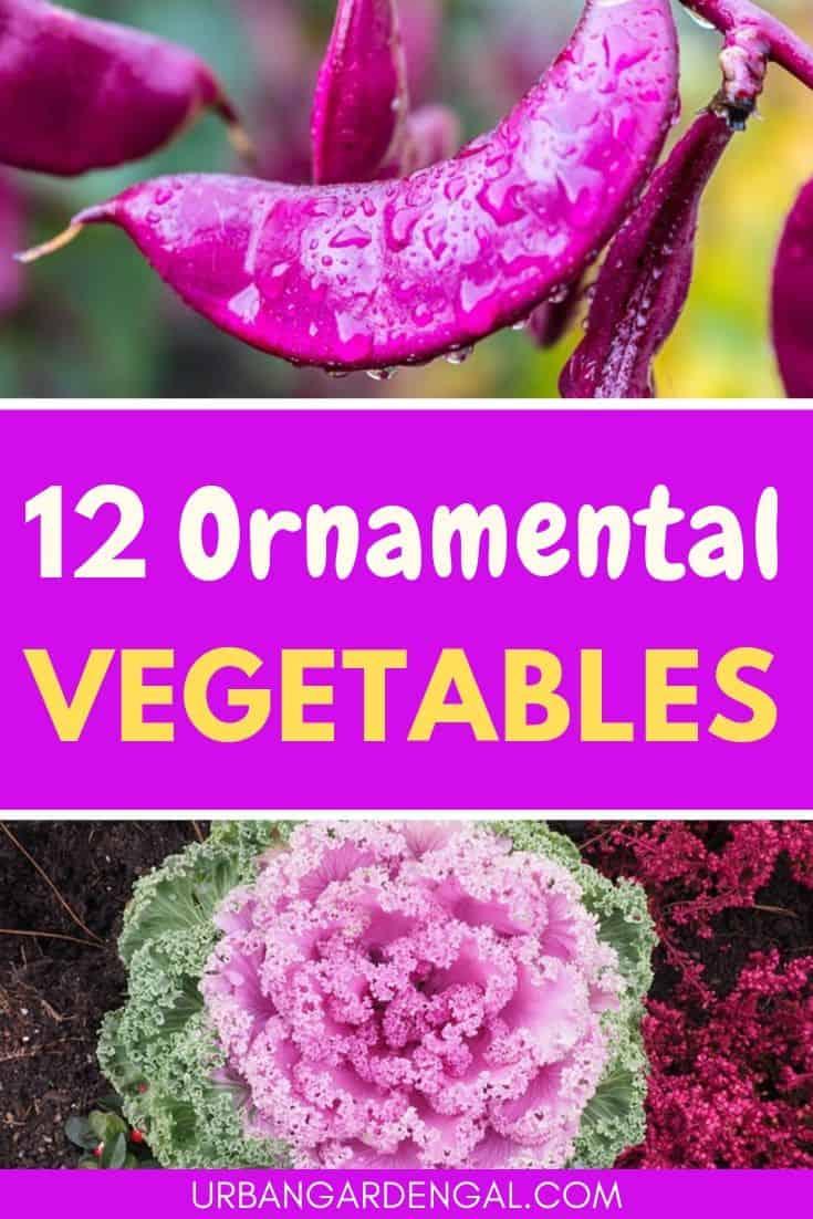 Best ornamental vegetable plants