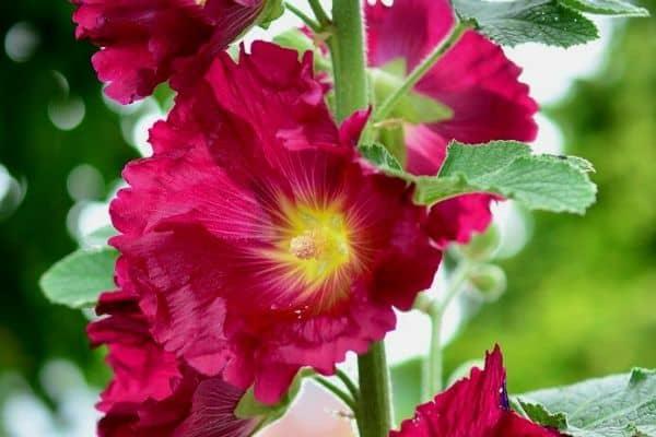 10 Tall Perennials