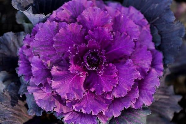 15 Purple Vegetables For Your Garden