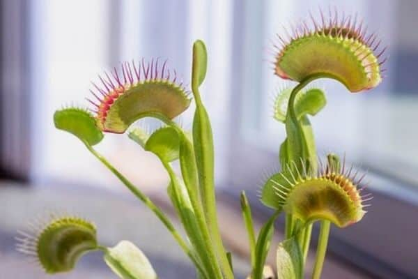 5 Carnivorous Houseplants