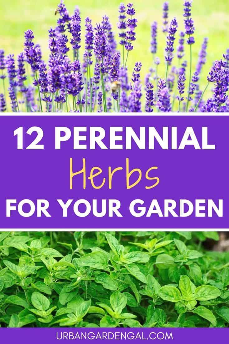 Perennial herbs for your herb garden