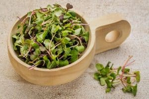 10 Fast Growing Salad Vegetables
