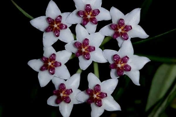 Star shaped flowers