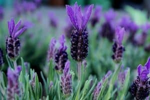 10 Flowering Herb Plants