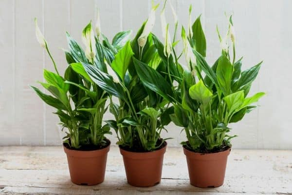 fertilizing houseplants in winter