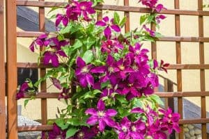 How To Grow Flowers Vertically