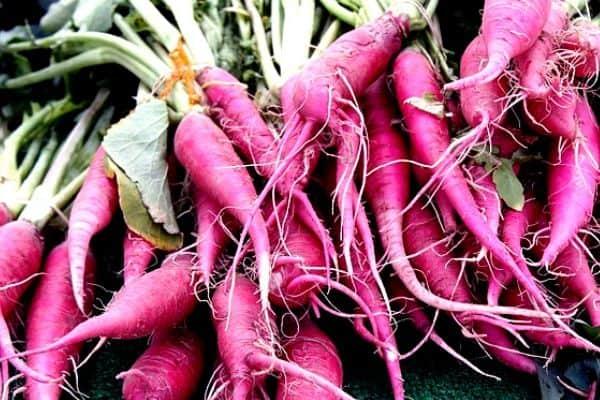 purple carrot plants