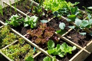 10 Small Vegetable Garden Ideas