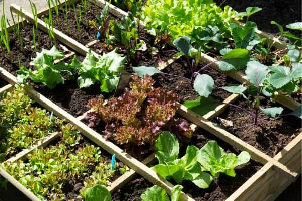 10 Small Vegetable Garden Ideas