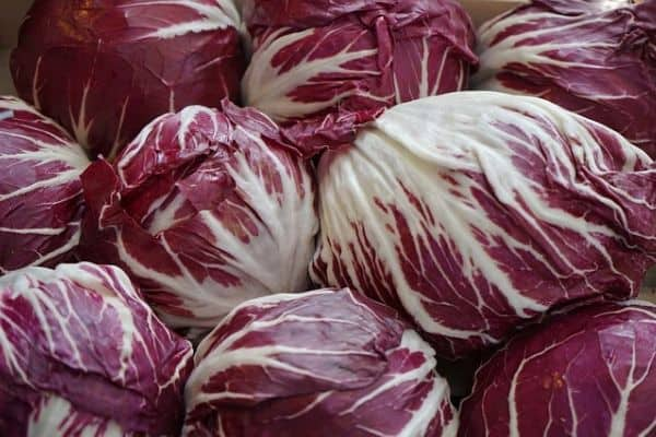 purple radicchio