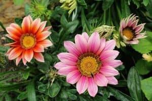 15 Drought Resistant Flower Plants