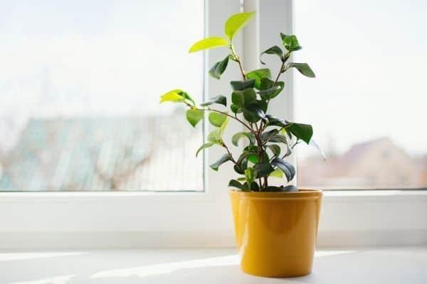 indoor plant in direct sun