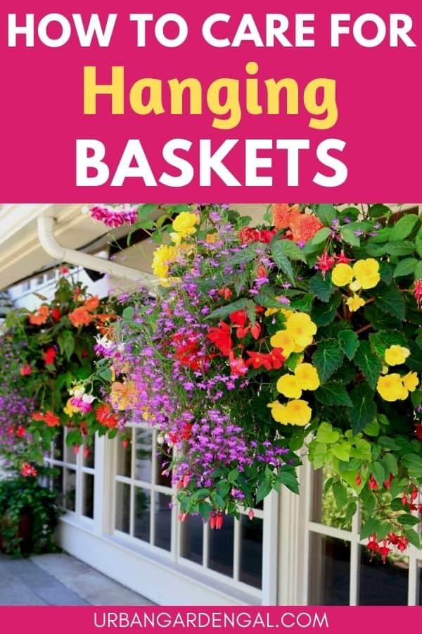 hanging flower basket care