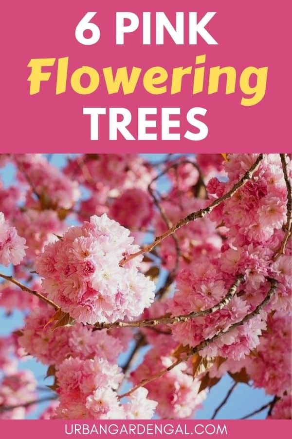trees with pink flowers