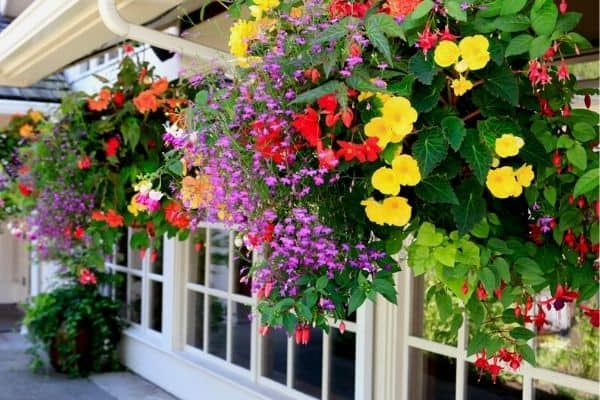 hanging baskets with colorful flowers