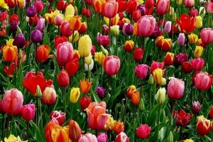 How To Care For Bulbs After Flowering