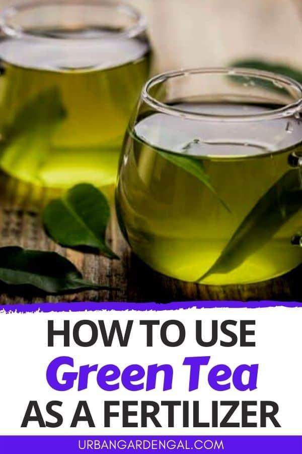 green tea houseplant fertilizer