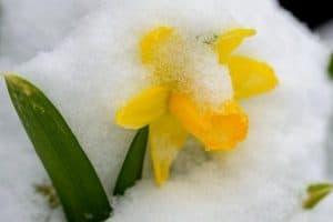 10 Winter Flowering Bulbs