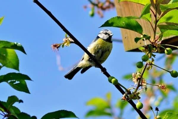 bird on a fruit tree