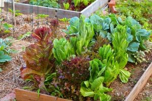 How To Start A Small Backyard Farm