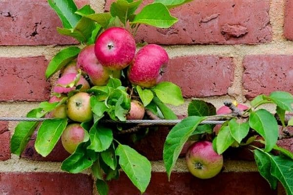 8 Small Fruit Garden Ideas