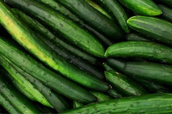 burpless cucumbers